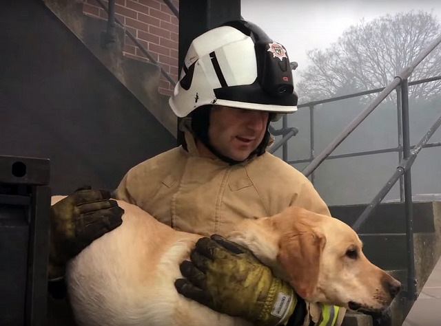 Firefighter Saves Dog