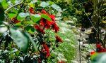 A home garden